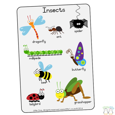Picture of Theme Wall Chart - Insects