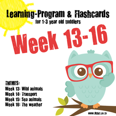 Picture of Learning Program & Flashcards Week 13-16